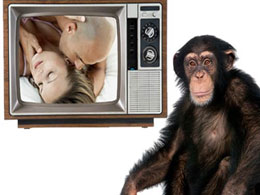 chimp loves porn